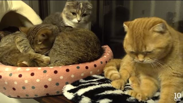 Watch These Sweet Cats Snuggle One Another