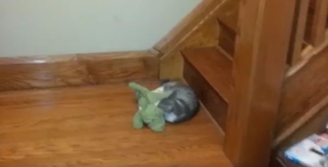 Watch This Cat and This Alligator In Their Sweet Struggle