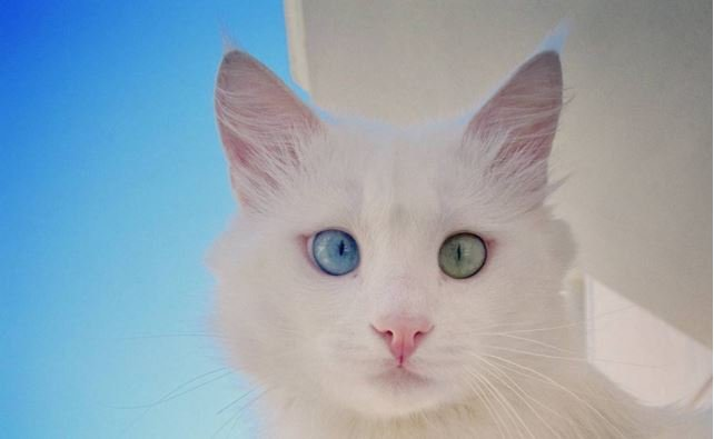 This Cat Has the Most Beautiful Eyes We've Ever Seen
