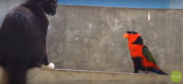 Birds Driving Cats Crazy Is Just The Kind of Video You Need Right Now