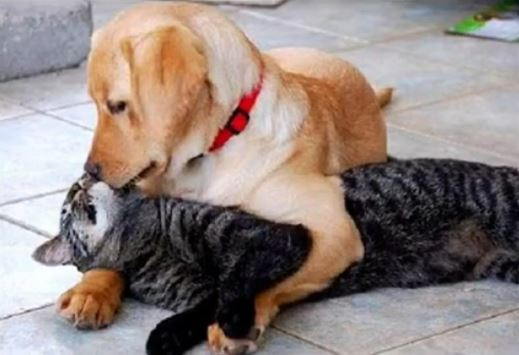Check Out This Adorable Video of Cats and Dogs Getting Along