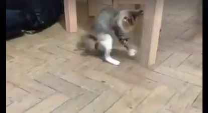 This Kitten and This Bug Are Hilarious Together