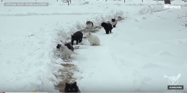 Man Walking Cats is the Best Thing We've Seen All Day
