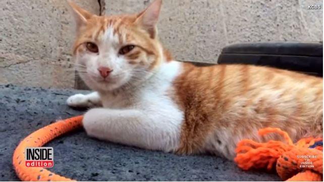 Veteran Reunited with Cat He Found Overseas
