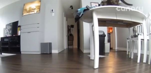 Nosy Cat Gets What He Deserves and It's Hilarious