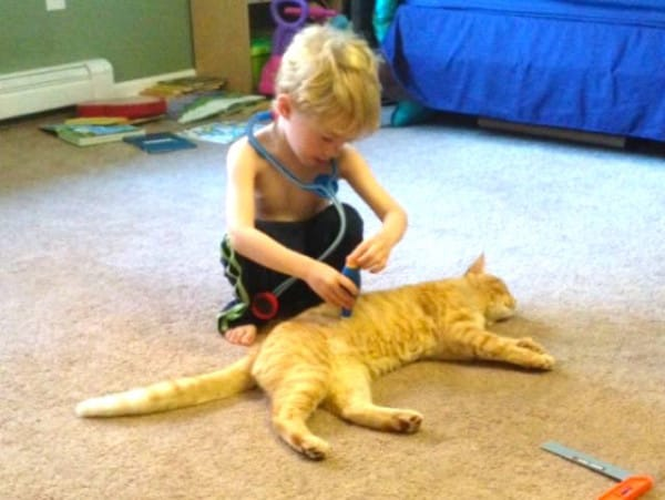 Four-Year-Old Tucks His Rescue Kitten into Bed Every Single Night