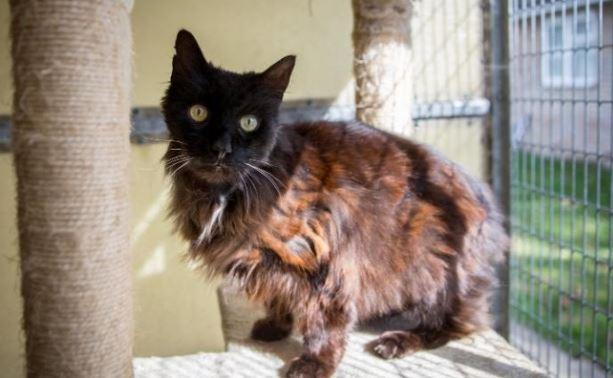 Is Abandoned Cat Britain's Oldest Feline Friend?