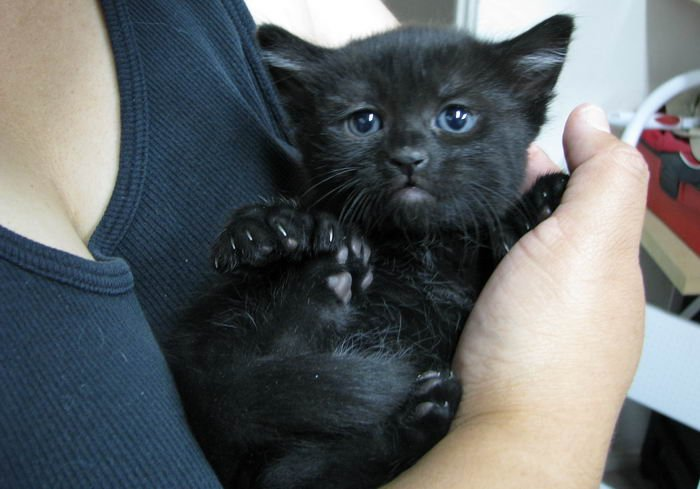 Black Cats:  10 Myths You Shouldn't Listen To