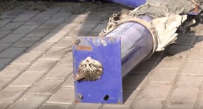 Firefighters Rescue Cat That Got Stuck Upside Down Inside A Pipe