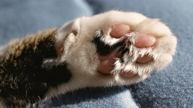 10 Things You Didn't Know about Cat Paws