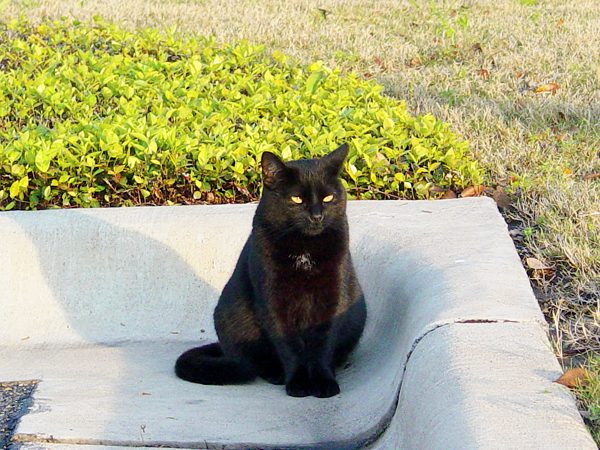 Giving Hope to Feral Cats in Austin, Texas