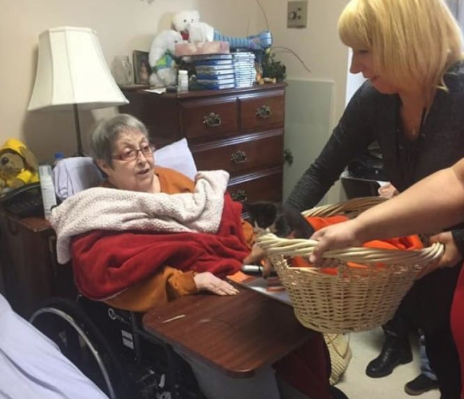Hospice Patient Gets Basket Full of Kittens