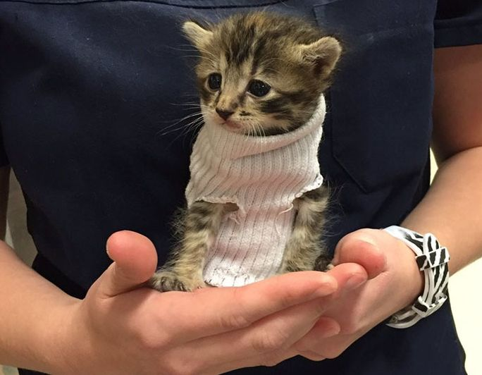 Kitten Rescued From Hurricane Matthew Gets New Home and More