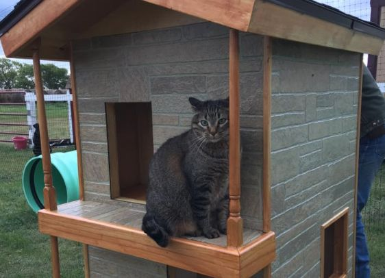 """Rescuer Creates """"Kitty City"""" for Displaced Shelter Cats"""
