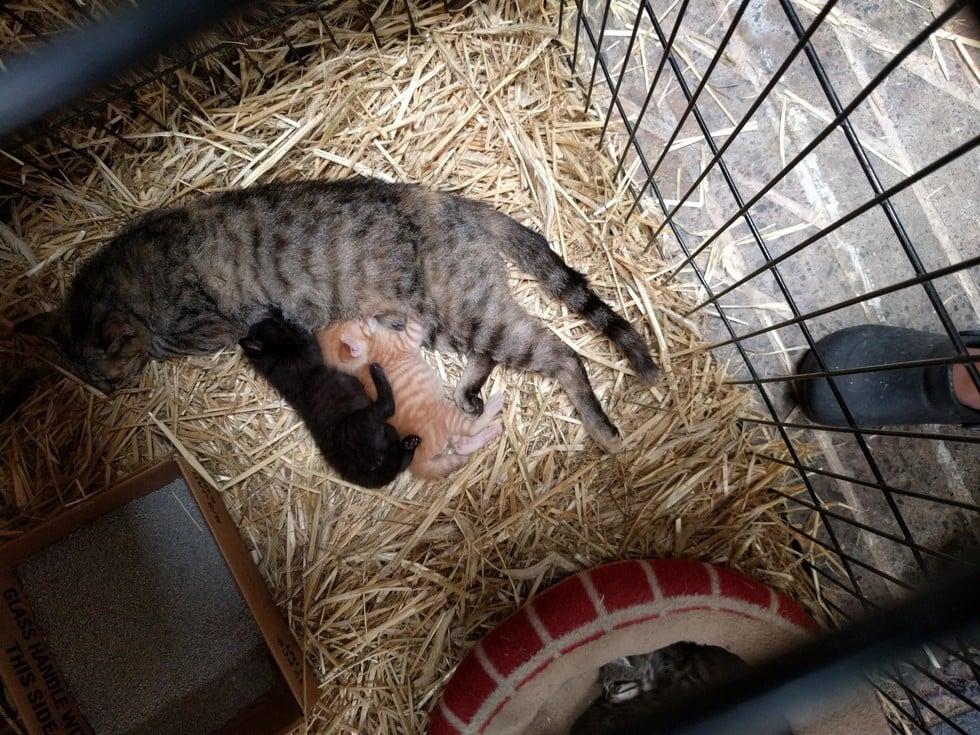 Woman Can't Resist Adopting Cats Despite Original Intention
