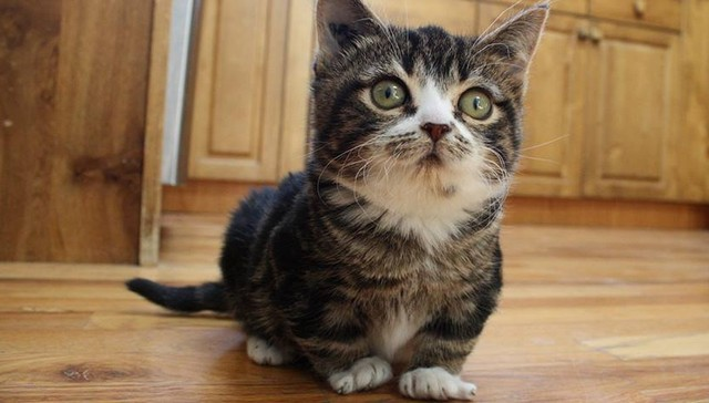 Dwarfism in Cats: 5 Things You Should Know
