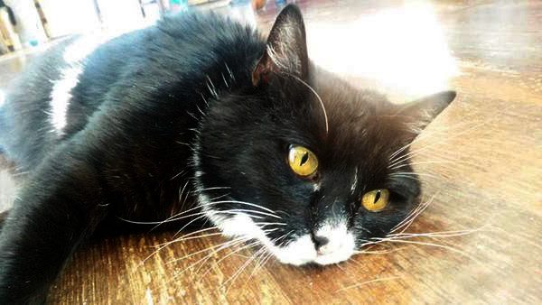 "Despite an Odd Walk, Paralyzed Cat ""Flopsy Wobbles"" is Rebuilding her Life"