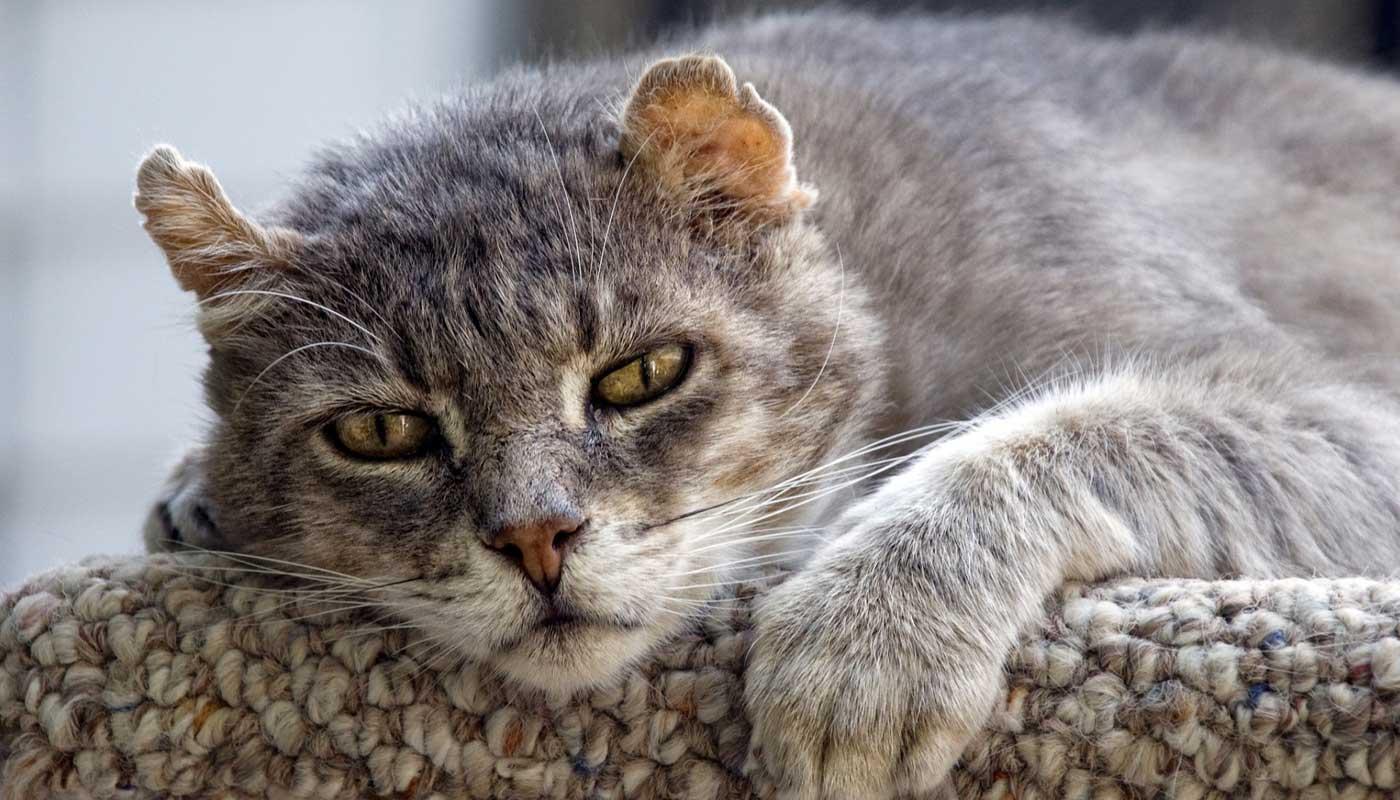 Five Reasons to Avoid Adopting a Senior Cat