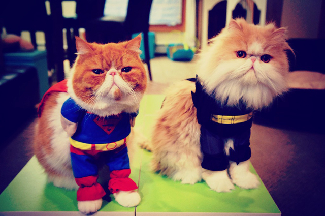Five Superhero Powers That Cats Actually Have