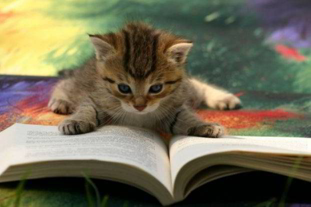 Image result for cats with books