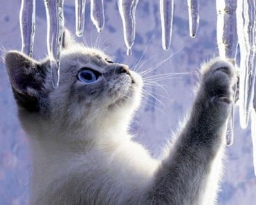 Do Cats Hibernate in the Winter?