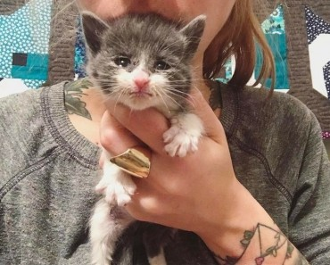 Woman has Best Job in the World: Rescuing Tiny Kittens