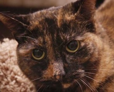 Shelter Cat Keeps Getting Returned Because She's Shy