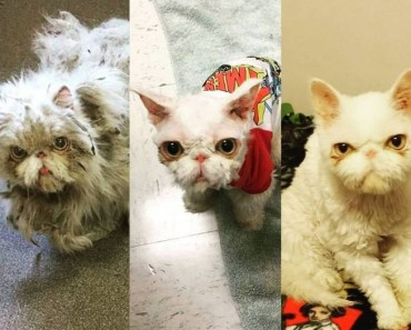 Cat Rescued From Basement Gets 5 lbs of Fur Cut Off