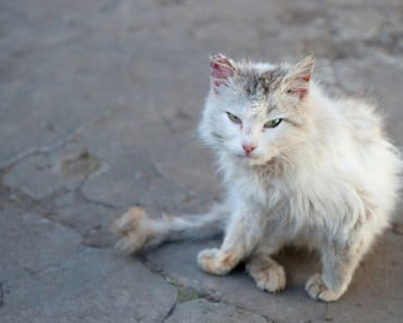 78-Year-Old Tampa Woman Sued for Feeding Stray Cat