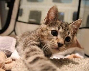 Woman Meets Kitten and Can't Sleep Until She Adopts Him