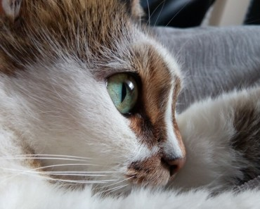How to Deal with Upper Respiratory Infections in Cats