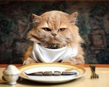 Five Tips On Dealing With A Finicky Eating Cat