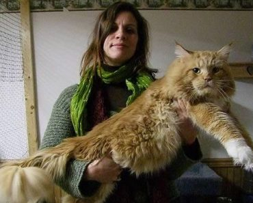 Five Maine Coon Cat Myths You Shouldn't Believe