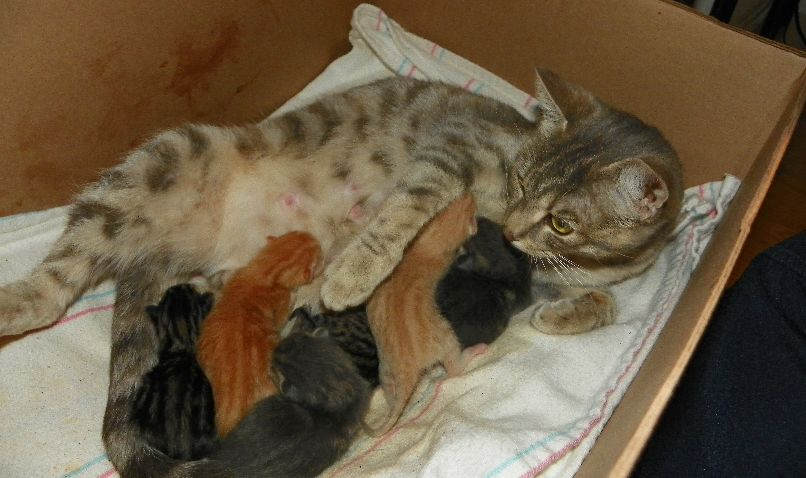 How Long Are Cats Pregnant?