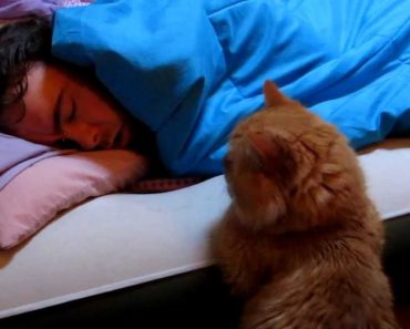 Cat Snuggles with Daddy to Wake Him Up But there's a Problem