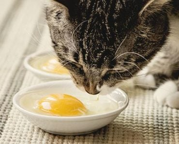 Can Cats Eat Eggs? Here's the Full Answer