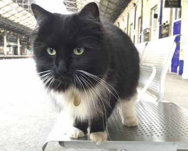 Felix The Railway Cat Helps Humans and Watches Birds
