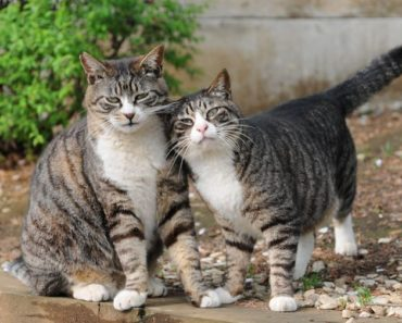 The Five Most Popular Tabby Cat Names In 2017