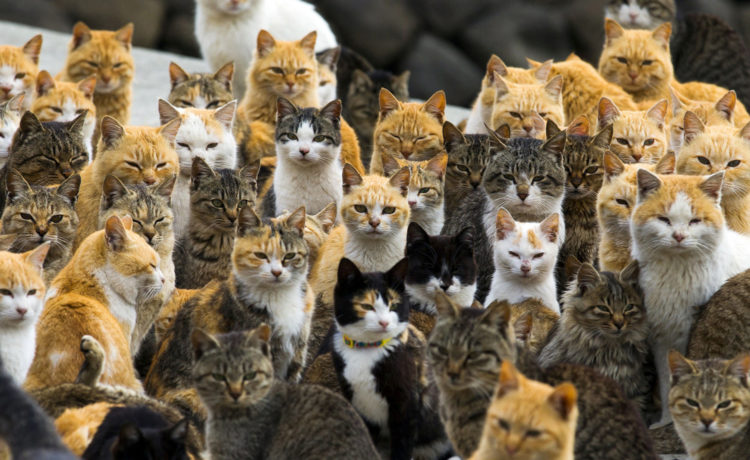 Woman Forced to Find Home for 350 Cats She Had No Permit For
