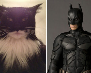 20 Cats That Look Like Other Things