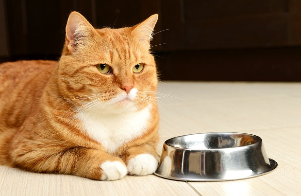 Do Cats Eat Cottage Cheese