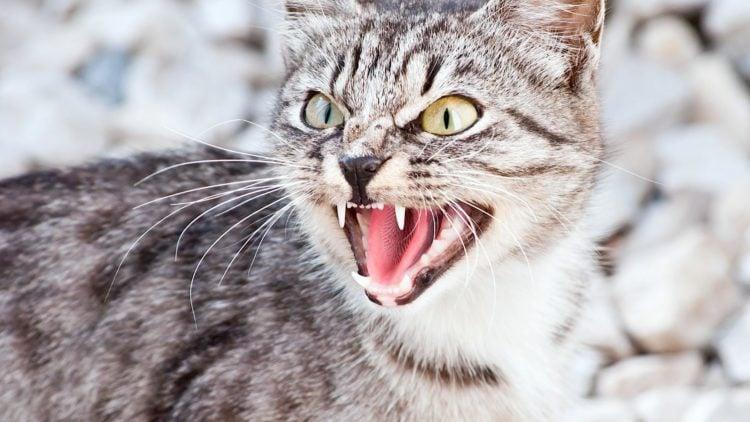 correcting aggressive cat behavior