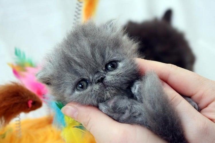 Channel Cat Eyes