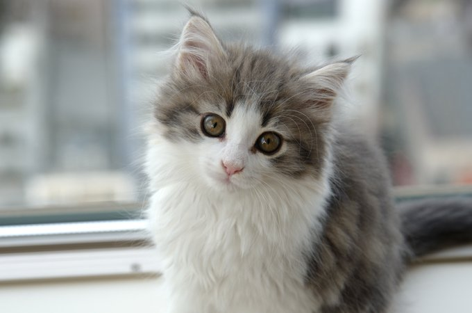 The Top 20 Mixed Cat Breeds In The World
