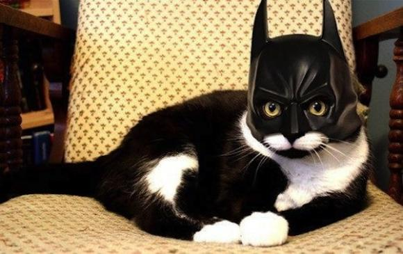 & Five Tips to Keep Your Cats Safe on Halloween