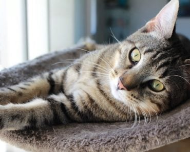 20 Fun Facts You Didn't Know About Tabby Cats