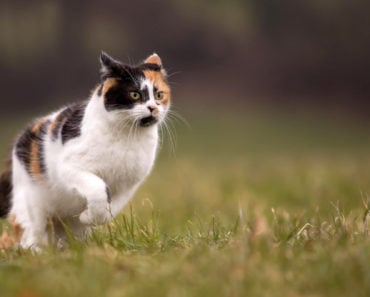 Science Explains Why Your Cat Runs Around at Night