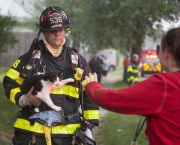 20 Beautiful Cats and Firemen Videos