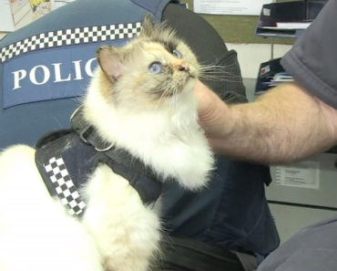 20 Incredible Cats and Policemen Videos