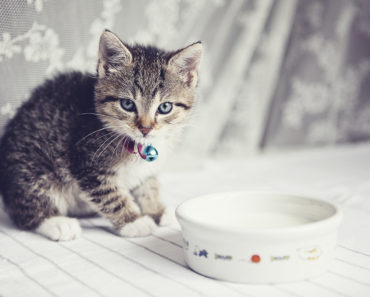 20 Adorable Videos of Cats Drinking Milk